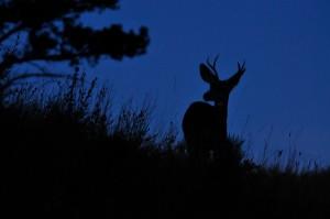 DeerSilhouette