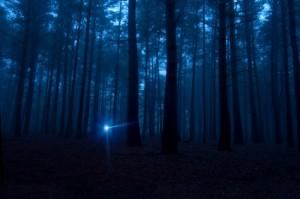 156365-425x282-A-flashlight-shining-in-the-dark-woods