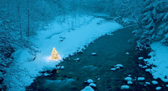 lonely-winter-christmas-tree-wallpapers-t