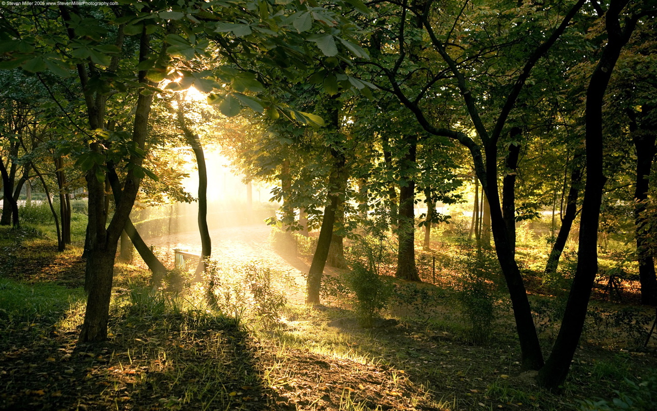 Dawn in madrid forest wallpaper - Madrid forest ...