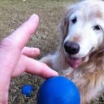 The infamous blue balls...