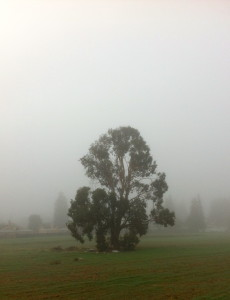 On some foggy days, it's hard to tell the difference between morning or afternoon . . .