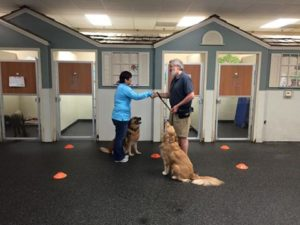 With Kynzi at our Canine Good Citizen class: greeting another dog owner.